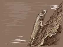 Ящерица иллюстрация штока