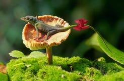 ящерица anole зеленая Стоковое Изображение RF