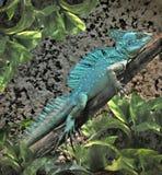 ящерица basilisk Стоковые Изображения RF