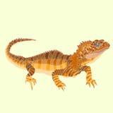 Ящерица Tuatara Стоковое Фото