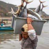 Ящики более больших рыб безопасны от нападения птицы фрегата, с Стоковое Изображение