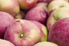 ящик яблока Стоковые Изображения