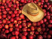 ящик яблока Стоковые Фото