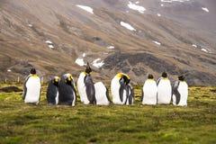 Я босс сегодня! Король пингвины Стоковые Изображения