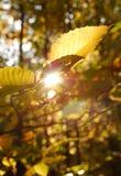 Я вижу свет Стоковое Фото