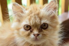я котенок Стоковое Изображение RF