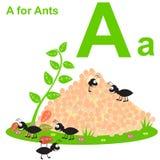 A для муравьев Ягнит алфавит Стоковое Изображение RF