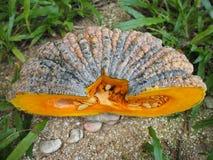 Ядр и семя половинной тыквы с нерезкостью движения Стоковые Фото