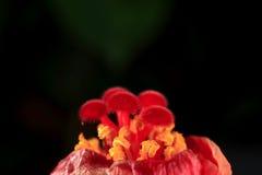 Ядр цветка конца-вверх стоковое изображение rf