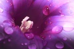 Ядр цветка конца-вверх стоковое изображение