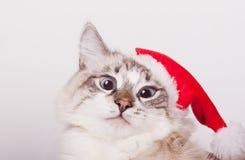 Я Санта. стоковая фотография rf