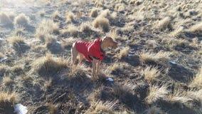 Я северный олень красно-пальто Стоковая Фотография