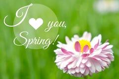 Я тебя люблю плакат цитаты весны мотивационный Стоковая Фотография