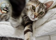 Я уловил вас славный котенок стоковое фото rf