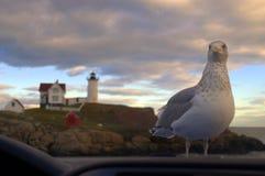 Я ХОЧУ ЕДУ! Взгляды чайки на Photograper через лобовое стекло автомобиля Стоковые Фотографии RF
