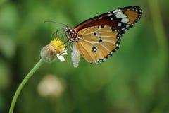 Я люблю трава Стоковая Фотография