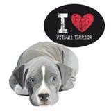 Я люблю Pitbull Terrior Стоковое Изображение