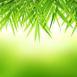 ฺBamboo leaves on green background Royalty Free Stock Image