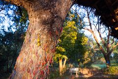 '杀害刽子手打孩子'的树 杀害领域的琼邑克 库存照片