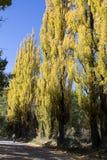 'mendoza, Argentina , O 18 de abril de 2011: estrada de terra com árvores ` imagem de stock