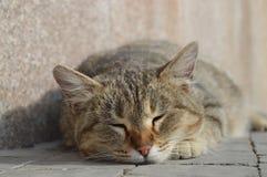 'För КР¾ Ñ (katten) Fotografering för Bildbyråer