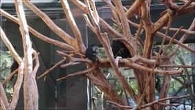 'Schönbrunner Tiergarten ' stock video