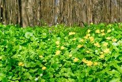 """""""Árboles y plantas verdes en el bosque"""". Imagen de archivo"""