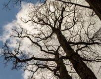 """""""Questa quercia ha soltanto 300 anni Primavera, vivrò sopra immagine stock libera da diritti"""