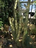 """""""Onderzoekend het Leven Cactus"""" Stock Afbeelding"""