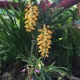 """Orchideebloemen en sier "" Royalty-vrije Stock Foto"