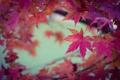 ‰ ¼ leavesï клена ¼ leafï клена ˆPlant стоковые изображения rf