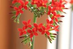 ‰ För ¼ för flowersï för ˆLongevity för Garan dishï¼, Royaltyfria Foton