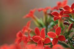 ‰ För ¼ för flowersï för ˆLongevity för Garan dishï¼, Royaltyfri Bild