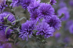 ‹/FLOWERS DEL 'Ñ DEL ² Ð?Ñ DE ЦРImagen de archivo libre de regalías