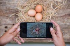 ‹Astuto del †del ‹del technology†del telefono del ‹dello smart†di uso dell'agricoltore del ‹di The†da vendere Fotografia Stock