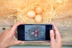 ‹Astuto del †del ‹del technology†del telefono del ‹dello smart†di uso dell'agricoltore del ‹di The†da vendere Immagine Stock Libera da Diritti