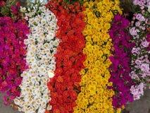 ‹Coloré de flowers†Photo stock