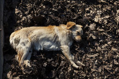 ‹D'†de ‹d'†de chien égaré se reposant dans le soleil d'automne Photo stock