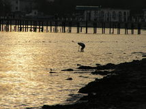 ‹Del †del ‹del †del mar en la puesta del sol Fotografía de archivo libre de regalías
