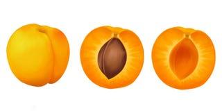‹För †för aprikospå en vit bakgrund royaltyfri illustrationer