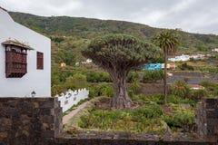 "€žDrago famoso Milenario"" de Dragon Tree em Icod de los Vinos, Tenerife imagem de stock"