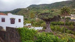 """€žDrago famoso Milenario"""" de Dragon Tree em Icod de los Vinos, Tenerife fotos de stock"""