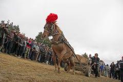 €™sdag för St Todor Loppet med häst- och hästhandtagvagnar med skurkroll loggar in den Todorov dagen arkivbilder