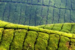 € «изумляя HDR плантации чая Стоковая Фотография RF