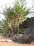 € «Loquillio пляжа Loquillio, Пуэрто-Рико Стоковая Фотография RF