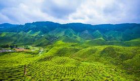 """€ """"HDR de surpresa da plantação de chá Fotografia de Stock"""