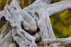 """€ del extracto de la naturaleza """"pedazo de madera gastado naturalmente nudoso y resistido fotos de archivo"""