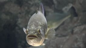 一丑恶鱼漂浮 影视素材