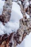 一个下落的巨人在雪休息 免版税库存图片