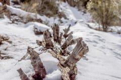 一个下落的巨人在雪休息 免版税图库摄影